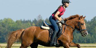 Физические нагрузки для лошади, постой для лошадей в Подмосковье, конюшня, аренда денников для лошадей, прокат лошадей в Подмосковье, уроки верховой езды, покататься на лошадях в Подмосковье, конные прогулки, прогулки на лошадях