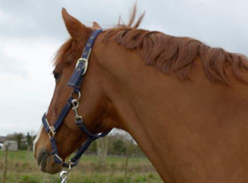 вылечить от глистов лошадь, постой для лошадей в Подмосковье, конюшня, аренда денников для лошадей, прокат лошадей в Подмосковье, уроки верховой езды, покататься на лошадях в Подмосковье, конные прогулки, прогулки на лошадях