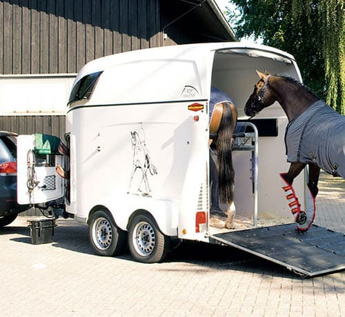 как перевозят лошадей, постой для лошадей в Подмосковье, конюшня, аренда денников для лошадей, прокат лошадей в Подмосковье, уроки верховой езды, покататься на лошадях в Подмосковье, конные прогулки, прогулки на лошадях