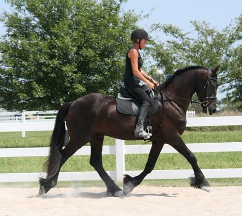 приучить лошадь к седлу, постой для лошадей в Подмосковье, конюшня, аренда денников для лошадей, прокат лошадей в Подмосковье, уроки верховой езды, покататься на лошадях в Подмосковье, конные прогулки, прогулки на лошадях
