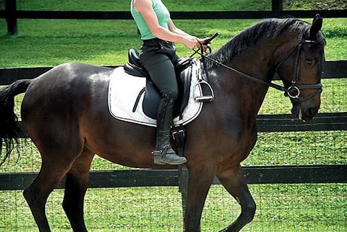 научиться ездить верхом, постой для лошадей в Подмосковье, конюшня, аренда денников для лошадей, прокат лошадей в Подмосковье, уроки верховой езды, покататься на лошадях в Подмосковье, конные прогулки, прогулки на лошадях