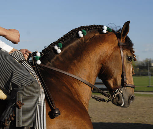 успокоить лошадь, постой для лошадей в Подмосковье, конюшня, аренда денников для лошадей, прокат лошадей в Подмосковье, уроки верховой езды, покататься на лошадях в Подмосковье, конные прогулки, прогулки на лошадях