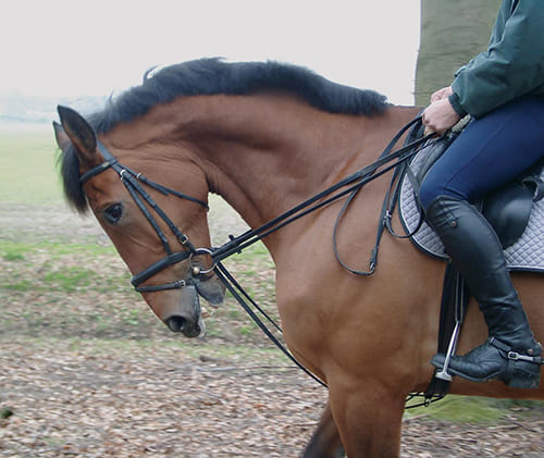 правильно выполнить объездку лошади, постой для лошадей в Подмосковье, конюшня, аренда денников для лошадей, прокат лошадей в Подмосковье, уроки верховой езды, покататься на лошадях в Подмосковье, конные прогулки, прогулки на лошадях