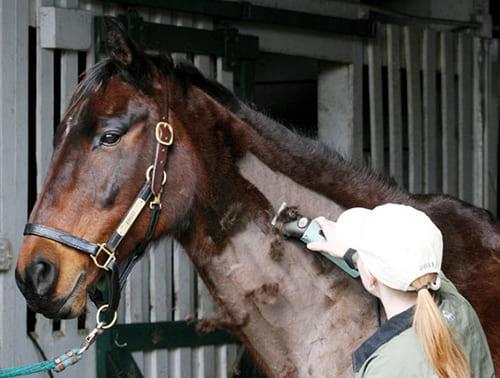 стрижка лошади, постой для лошадей в Подмосковье, конюшня, аренда денников для лошадей, прокат лошадей в Подмосковье, уроки верховой езды, покататься на лошадях в Подмосковье, конные прогулки, прогулки на лошадях