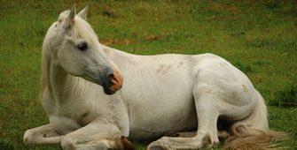 научить лошадь правильно ложиться, постой для лошадей в Подмосковье, конюшня, аренда денников для лошадей, прокат лошадей в Подмосковье, уроки верховой езды, покататься на лошадях в Подмосковье, конные прогулки, прогулки на лошадях