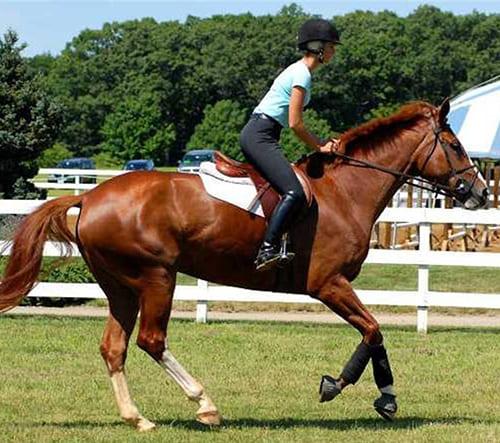правила общения с лошадьми, постой для лошадей в Подмосковье, конюшня, аренда денников для лошадей, прокат лошадей в Подмосковье, уроки верховой езды, покататься на лошадях в Подмосковье, конные прогулки, прогулки на лошадях
