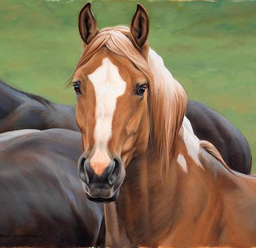 научиться водить лошадь, постой для лошадей в Подмосковье, конюшня, аренда денников для лошадей, прокат лошадей в Подмосковье, уроки верховой езды, покататься на лошадях в Подмосковье, конные прогулки, прогулки на лошадях