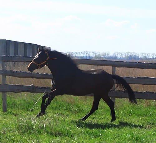 как выбирать лошадь при покупке, постой для лошадей в Подмосковье, конюшня, аренда денников для лошадей, прокат лошадей в Подмосковье, уроки верховой езды, покататься на лошадях в Подмосковье, конные прогулки, прогулки на лошадях