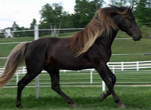 производные от основных мастей лошадей, постой для лошадей в Подмосковье, конюшня, аренда денников для лошадей, прокат лошадей в Подмосковье, уроки верховой езды, покататься на лошадях в Подмосковье, конные прогулки, прогулки на лошадях