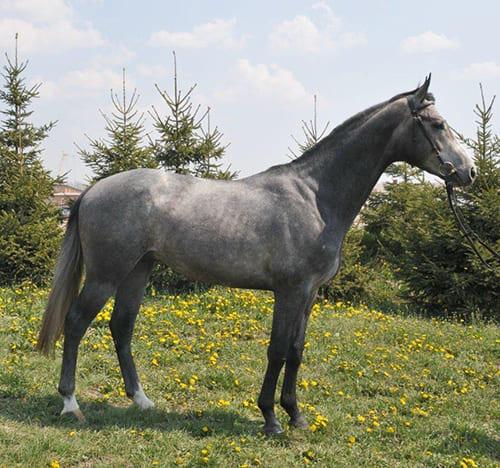 популярные масти лошадей, постой для лошадей в Подмосковье, конюшня, аренда денников для лошадей, прокат лошадей в Подмосковье, уроки верховой езды, покататься на лошадях в Подмосковье, конные прогулки, прогулки на лошадях