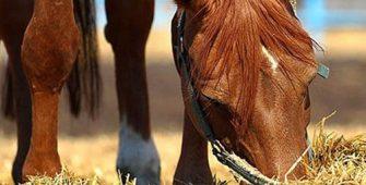 чем правильно кормить лошадь, постой для лошадей в Подмосковье, конюшня, аренда денников для лошадей, прокат лошадей в Подмосковье, уроки верховой езды, покататься на лошадях в Подмосковье, конные прогулки, прогулки на лошадях