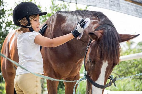 вылечить лошадь от вшей, постой для лошадей в Подмосковье, конюшня, аренда денников для лошадей, прокат лошадей в Подмосковье, уроки верховой езды, покататься на лошадях в Подмосковье, конные прогулки, прогулки на лошадях в Подмосковье
