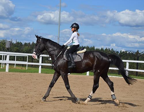 обучение верховой езде, постой для лошадей в Подмосковье, конюшня, аренда денников для лошадей, прокат лошадей в Подмосковье, уроки верховой езды, покататься на лошадях в Подмосковье, конные прогулки, прогулки на лошадях