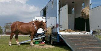 как правильно транспортировать лошадь, постой для лошадей в Подмосковье, конюшня, аренда денников для лошадей, прокат лошадей в Подмосковье, уроки верховой езды, покататься на лошадях в Подмосковье, конные прогулки, прогулки на лошадях в Подмосковье