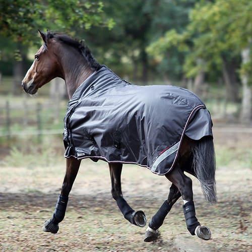 снаряжение для лошади, постой для лошадей в Подмосковье, конюшня, аренда денников для лошадей, прокат лошадей в Подмосковье, уроки верховой езды, покататься на лошадях в Подмосковье, конные прогулки, прогулки на лошадях в Подмосковье