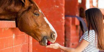 чем нельзя кормить лошадь, постой для лошадей в Подмосковье, конюшня, аренда денников для лошадей, прокат лошадей в Подмосковье, уроки верховой езды, покататься на лошадях в Подмосковье, конные прогулки, прогулки на лошадях в Подмосковье