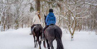 занятия верховой ездой в зимний период, постой для лошадей в Подмосковье, конюшня, аренда денников для лошадей, прокат лошадей в Подмосковье, уроки верховой езды, покататься на лошадях в Подмосковье, конные прогулки, прогулки на лошадях в Подмосковье