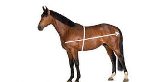 как определить вес лошади, постой для лошадей в Подмосковье, конюшня, аренда денников для лошадей, прокат лошадей в Подмосковье, уроки верховой езды, покататься на лошадях в Подмосковье, конные прогулки, прогулки на лошадях в Подмосковье